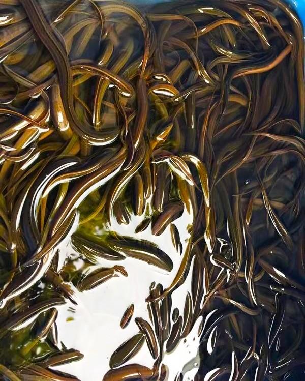 绵阳鳝鱼养殖品质保障
