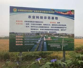 水稻种植与生产力模型