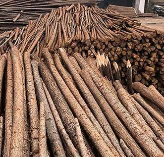 杉木桩厂家为大家介绍杉木市场的不断变化