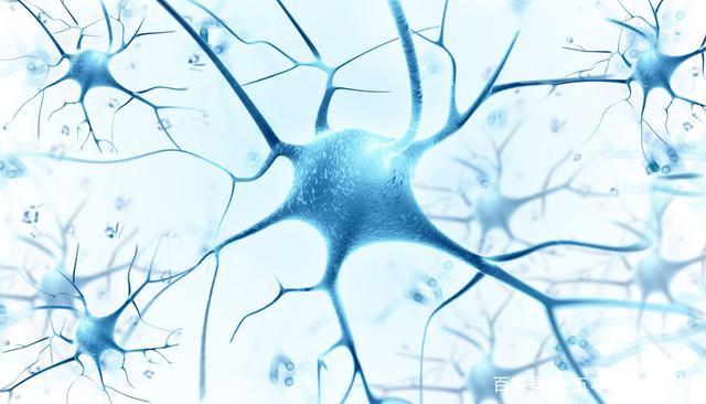 85个研究揭秘干细胞疗法修复脊髓损伤的可行性