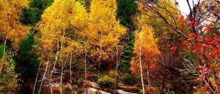 山西省召开2020年度林木品种审定专业委员会会议