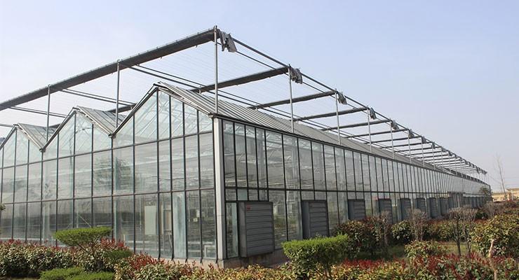 2019新型玻璃蔬菜温室大棚