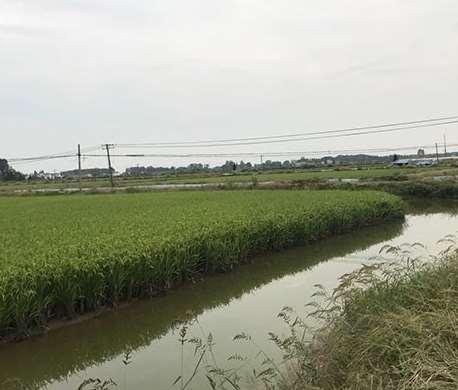 水稻种植的各个时期的表现