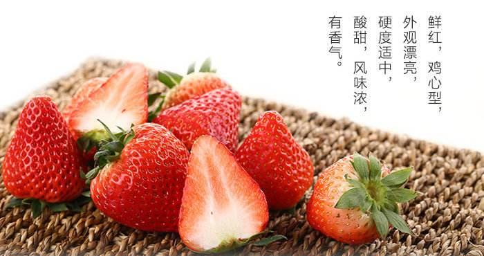 红颜草莓 种苗