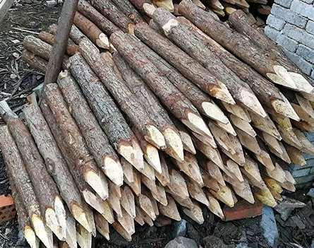 如果杉木桩使用寿命短是什么原因