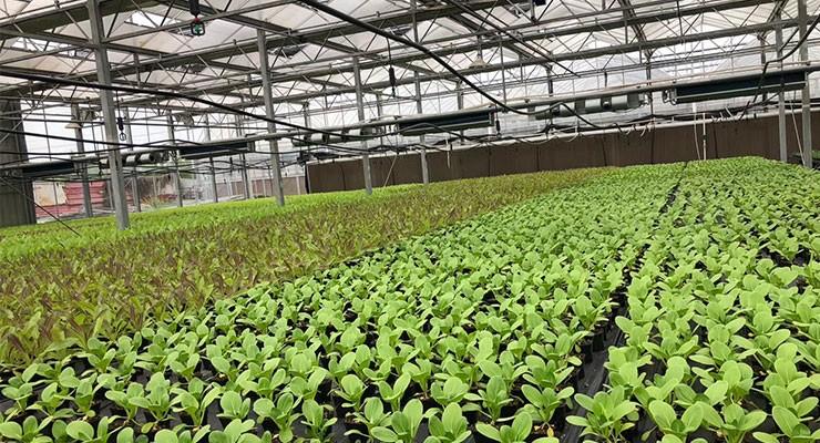 蔬菜大棚建造