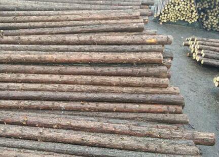 杉木桩的种植规范有哪些