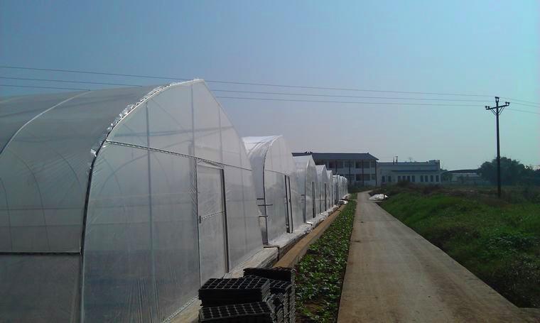 广东省中山薄膜温室