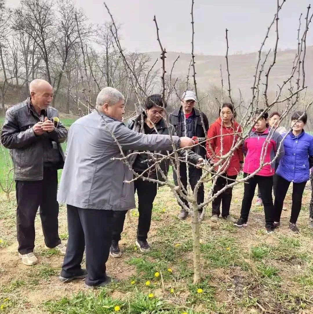 西安市临潼区开展花椒科技培训 助力乡村振兴
