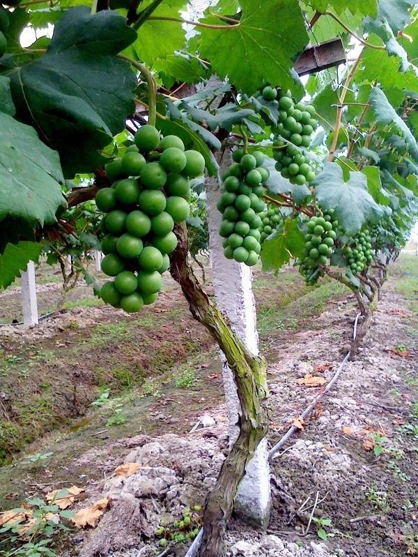 果树智能滴灌系统
