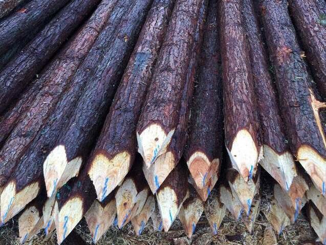 杉木桩厂家介绍杉木的一些常见用途