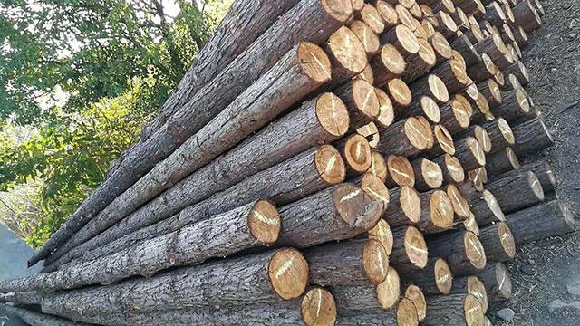 水利工程采用木桩地基有哪些好处