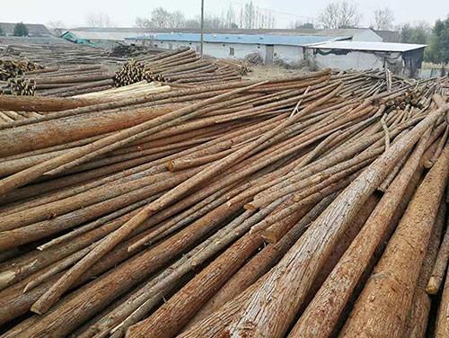 杉木原木加工厂