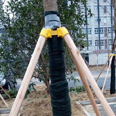 台风来了 树木支撑架好处多多