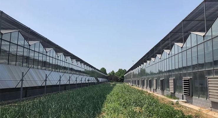 新型玻璃温室大棚