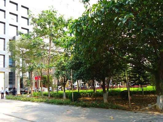 园林绿化养护基础知识分享