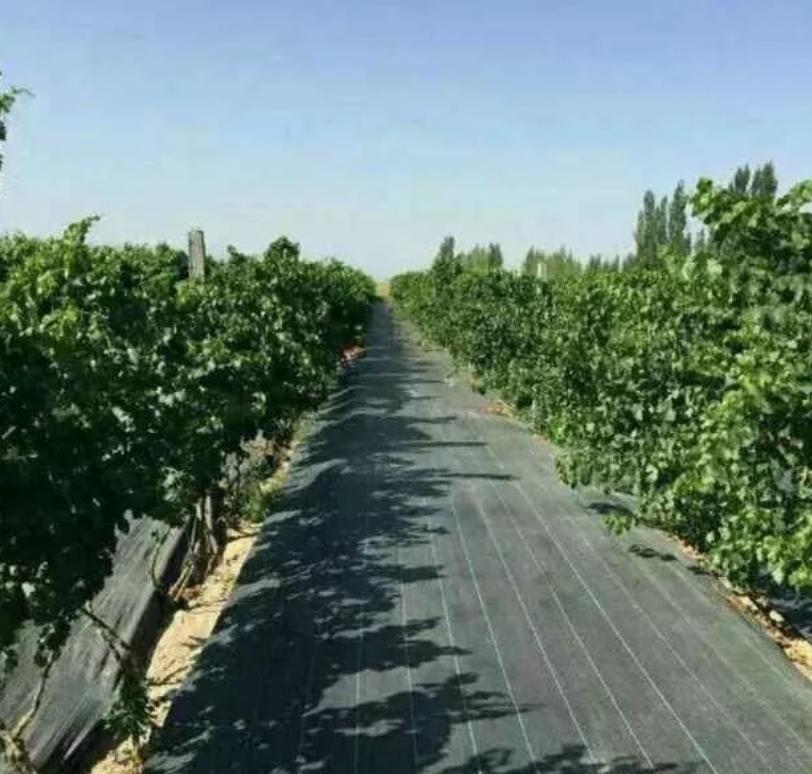 果园覆盖除草布技术要点