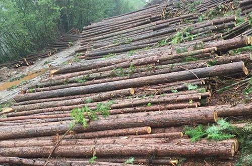 绿化支撑杉木杆