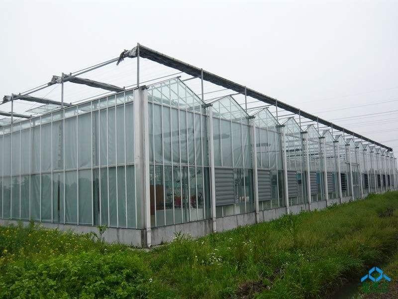温室大棚建造公司