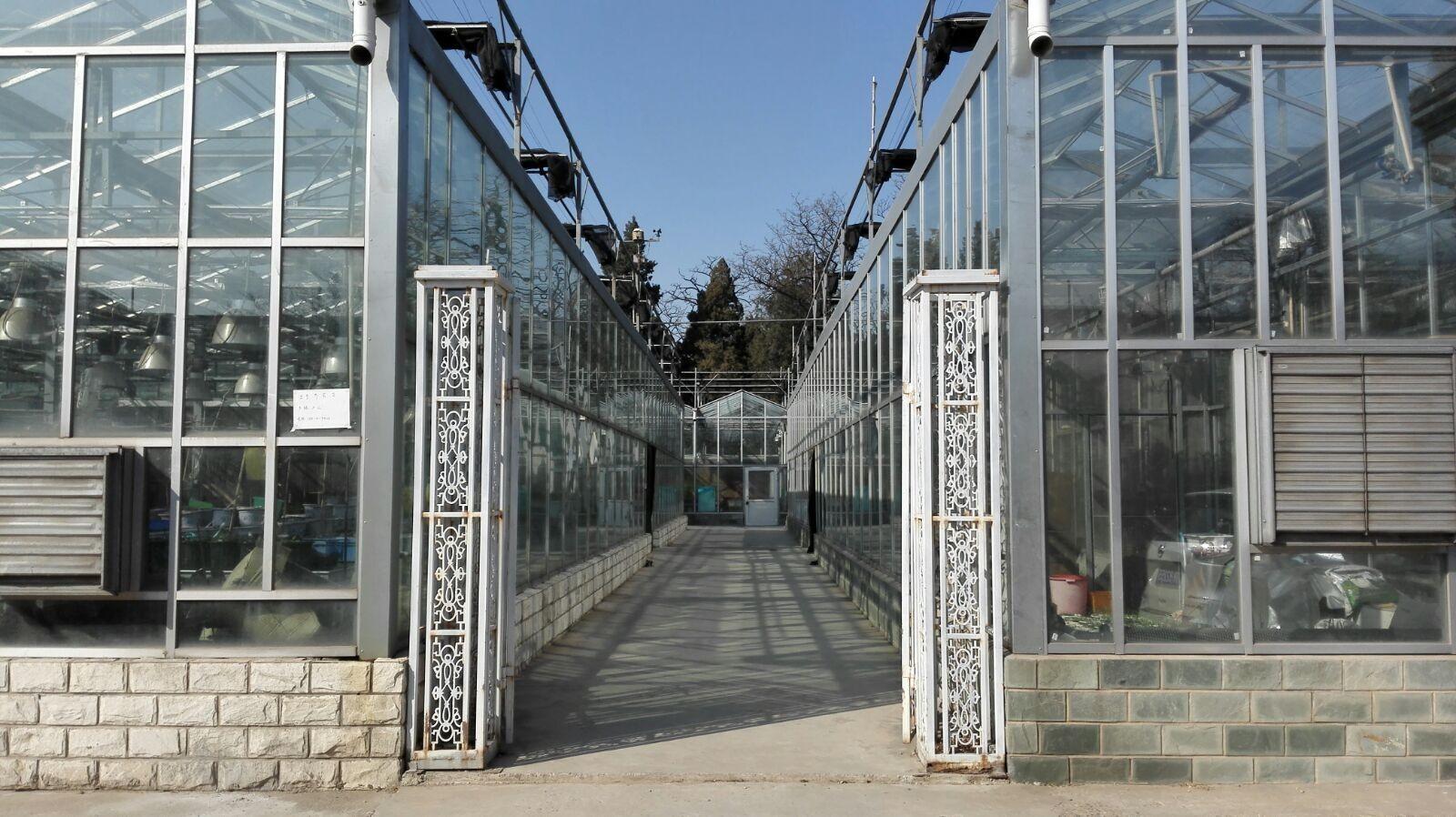 智能温室大棚常见的栽培模式有哪些?哪种效益