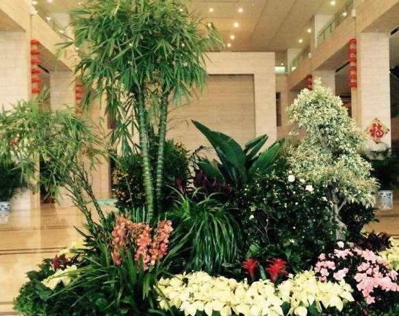 绿植租赁能带来哪些好处