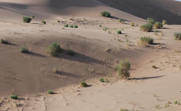 土地荒漠化防治的对策和措施
