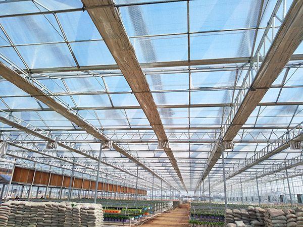 溫室大棚工程案例