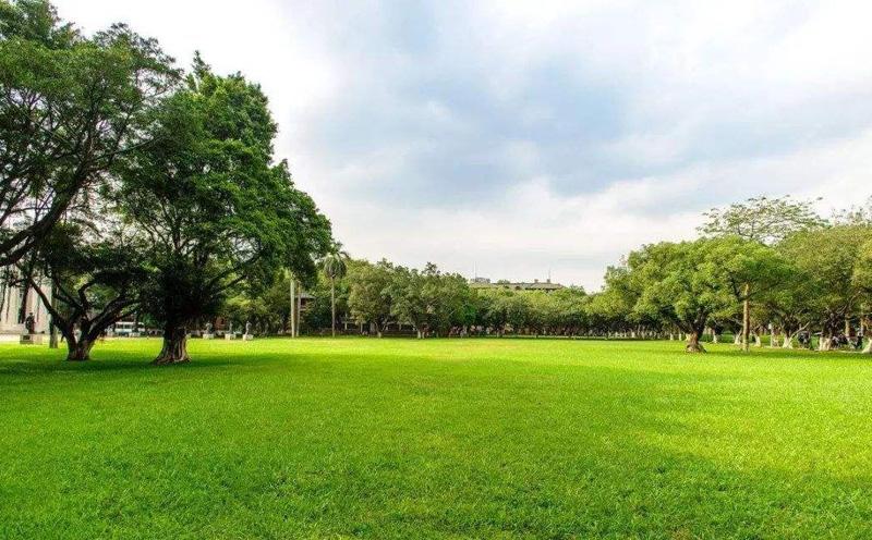 草坪上栽种苗木长势普遍不太好的原因有哪些呢