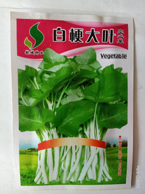 白梗大叶空心菜