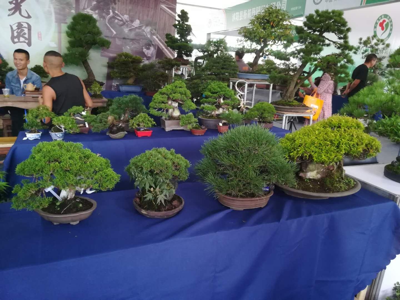 沭阳:全力提升花木产业发展质态 做大做强美丽经济