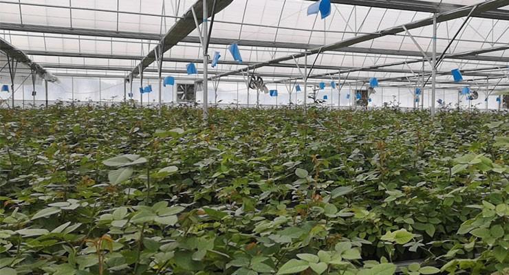 2019新型花卉温室大棚