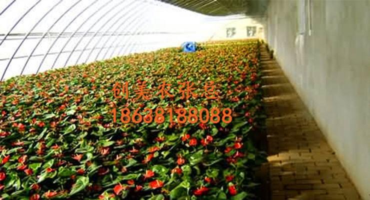 2017新型农业蔬菜温室大棚