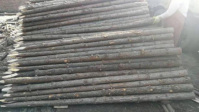 杉木桩与杉木板用于环保家具