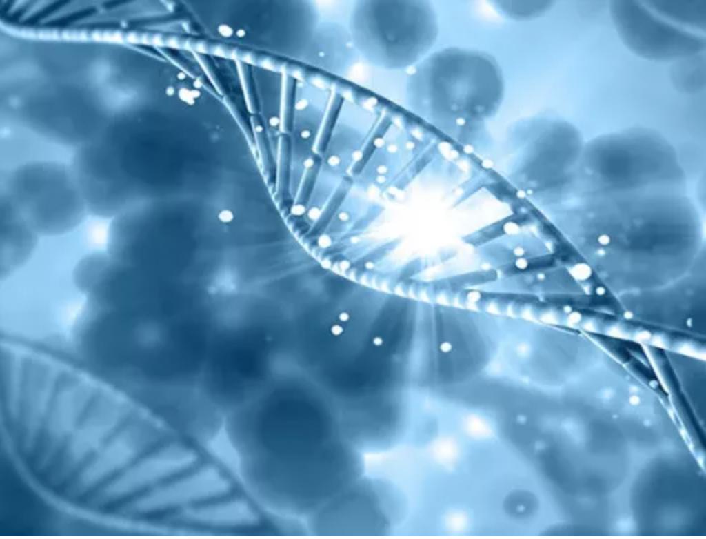 干细胞抗衰老回输免疫细胞是怎么逆转衰老的?