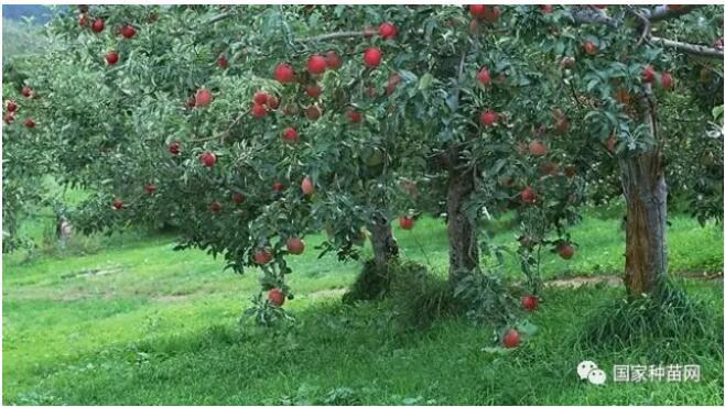 果树辩证管理技术