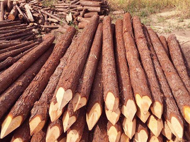 杉木桩产生开裂的原因是什么?