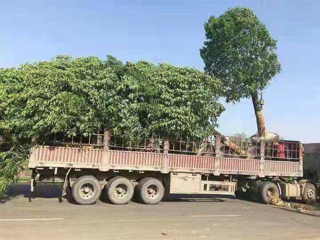 树木物流运输