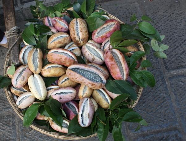 八月瓜(八月炸) 种苗
