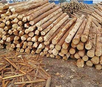 关于杉木桩采购知识解读