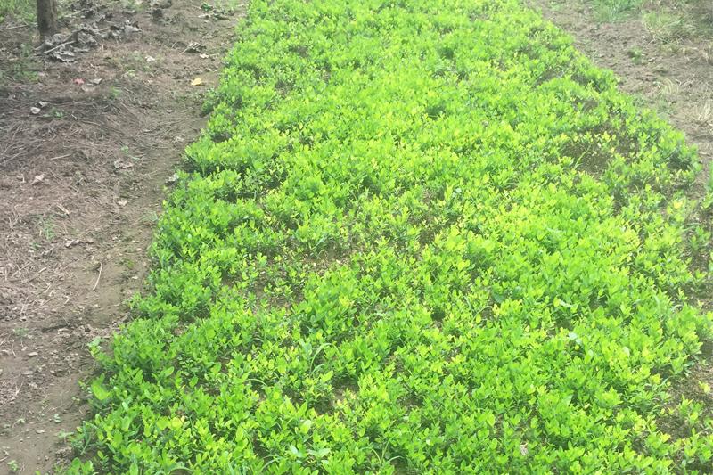 四川苗木批发产业发展的五大方向