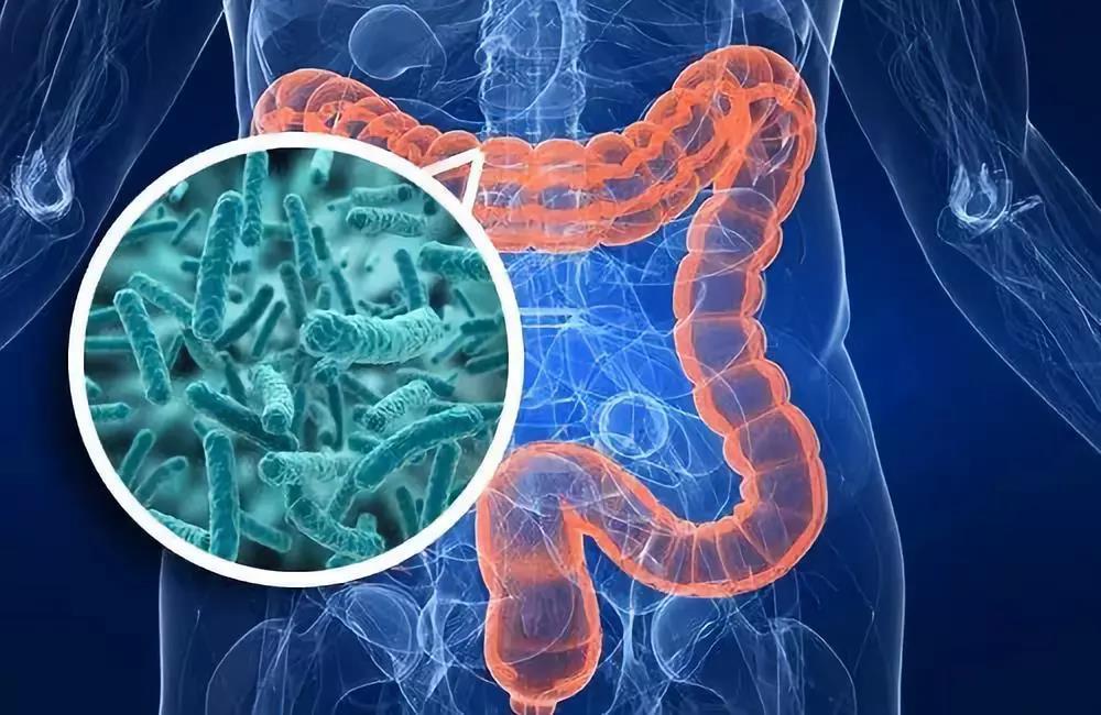 科学家发现肠道细菌-宿主相互作用的新机制