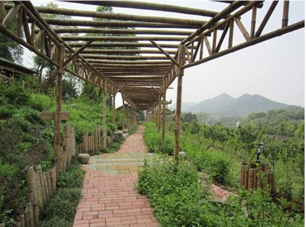葡萄架吊顶将大自然搬回家
