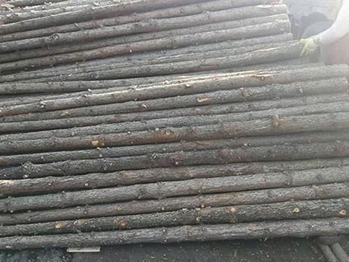 杉木桩价格