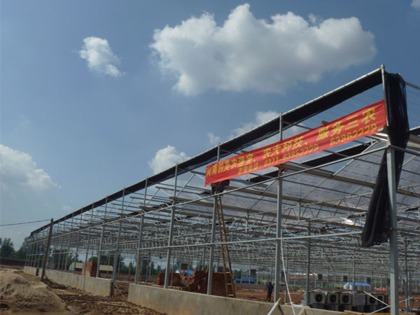 2012郑州陈砦花卉市场双桥花卉博览园