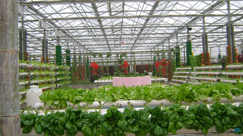 河南温室大棚在夏季管理时要注意哪些问题?