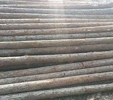 杉木桩在起初是如何种植的