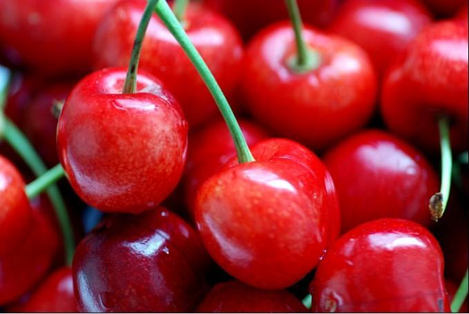 意大利早红樱桃 种苗