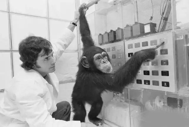 外国生物学家揭露人猿杂交真的存在?还成功了?
