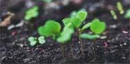 我国土壤环境质量重金属影响研究中一些值得关注的问题