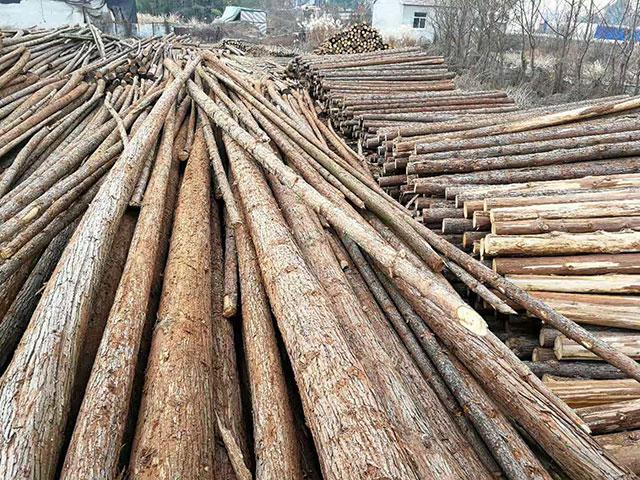 杉原木批发